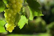 Six of the best Australian vineyards on the market