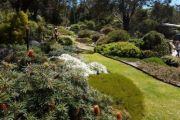 'They're bloody amazing': The garden style making a huge comeback