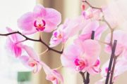 How not to kill that orchid you were given as a gift