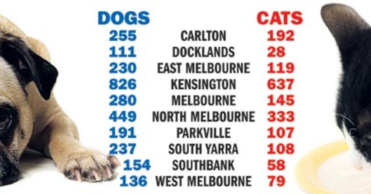 2 729 Dogsandcats Jpg