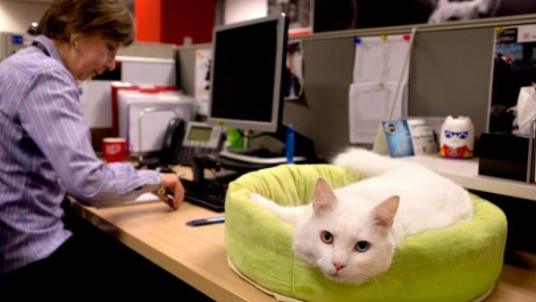 Pets in the office are helping relieve workplace stress