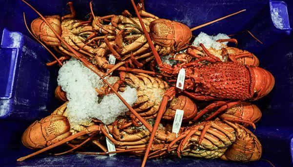 Sydney Fish Market Christmas seafood marathon kicks off for 2015
