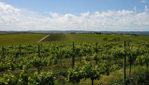 Dowie Doole named as buyer of McLaren Vale's Conte vineyards