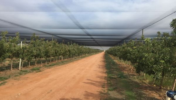 Undercover apple orchard for sale in Loxton SA
