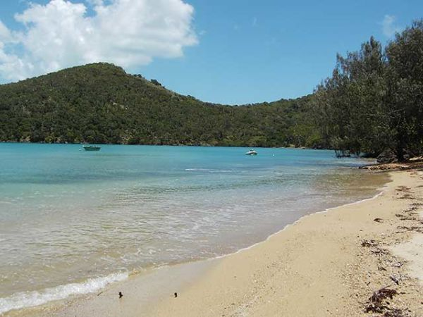 Secluded St Bees island for sale in Queensland - koalas included