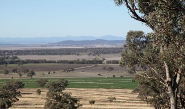 Farm sales to slow but values to keep rising