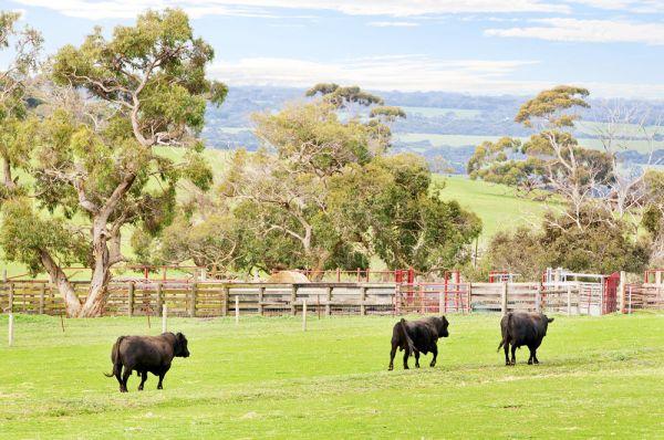 Kerry Stokes sells Kangaroo Island aggregation to Angus Taylor