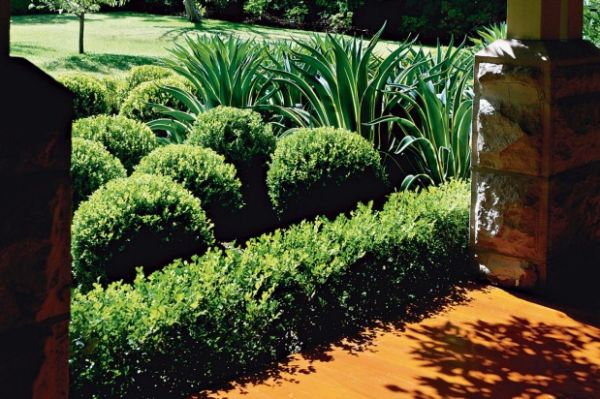 When is the best time to prune box hedges