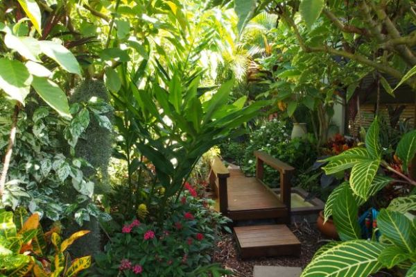 Love Your Garden How To Grow Tropical Plants