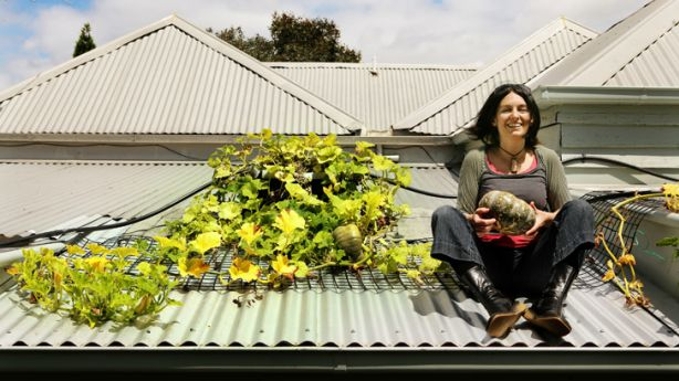 Katherine Wilson, committee member of Green Roofs Australia with pumpkins growing on her roof in