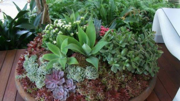 More The Merrier Succulents Make Excellent Pot Buds Photo Jason Hodges
