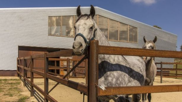 Happy inhabitants at Crackenback Stables by Casey Brown Architecture. Photo: Rhys Holland