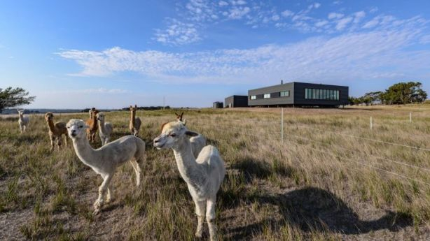 The property is also home to alpacas and cattle, which have to be ferried on and off the island. Photo: Jaime Diaz-Berrio