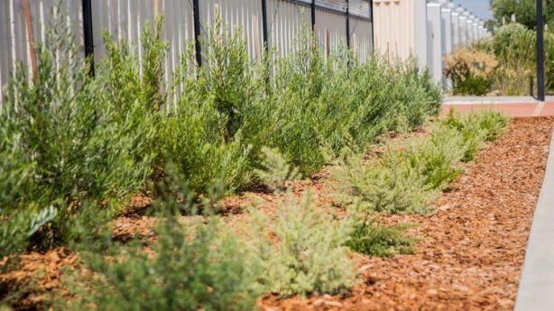 Native Verges In Western Australia Photo Morgan Gillham