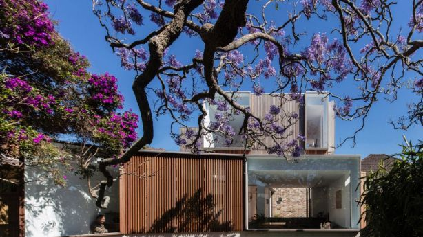 Panovscott Architects saw the Jacaranda tree as a structural element, to be used rather than discarded. Photo: Brett Boardman Photography