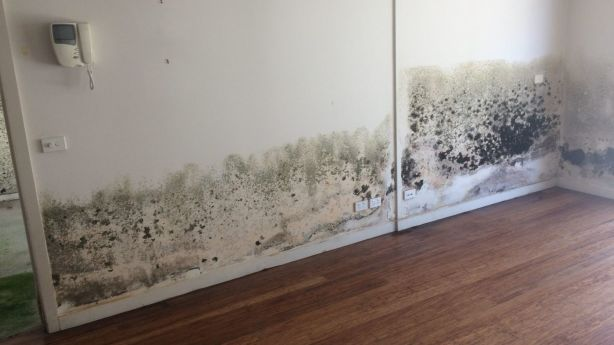 Mould is not always in visible places, often growing in wall cavities. Photo: Supplied.