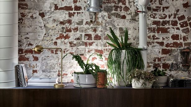 The colours were also chosen to complement the abundant indoor greenery that Toleman specified in his brief to the firm, as well as the exposed red-brick walls. Photo: Design Office