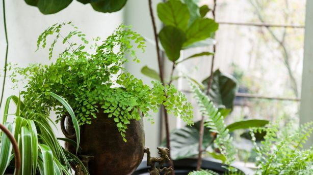 Looking after indoor plants is easier than you may think - and it'll pay off when it comes to your health. Photo: Daniel Shipp