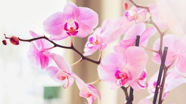 Nobody wants to look a gift orchid in the mouth. Photo: Laura Stolfi