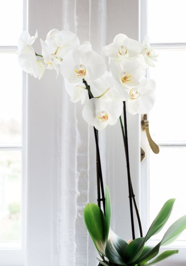Steamy bathrooms with skylights are particularly good because orchids enjoy humidity. Photo: Stocksy