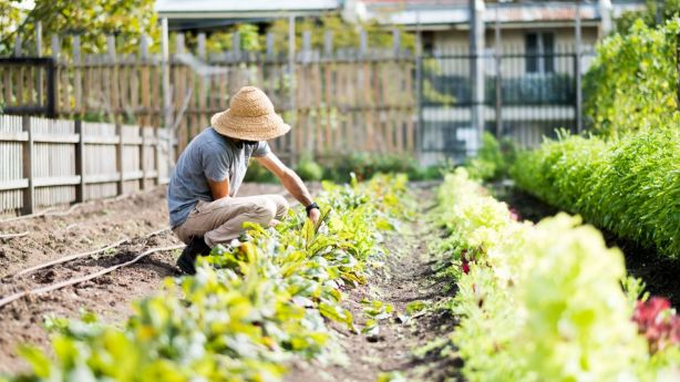 Just a year old and Pocket City Farms grows a huge range of vegetables, including kale, kohlrabi, coriander and cucumbers. Photo: Rory Lewis / On The Flipside