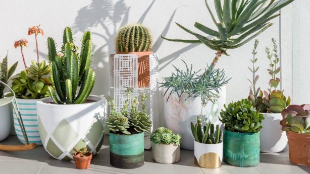 How To Keep Succulents Happy And Healthy Indoors
