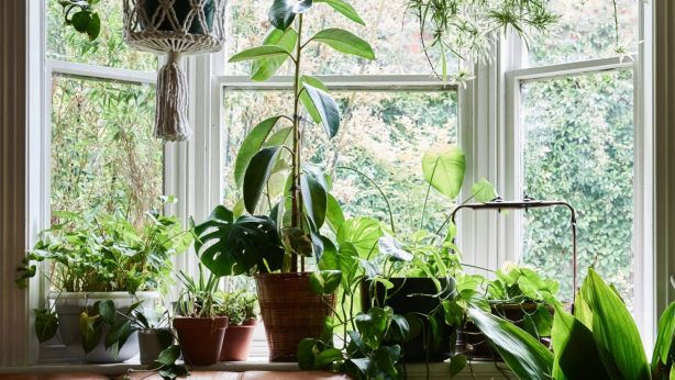 A collection of indoor plants framed against a bright window. Photo: Eve Wilson