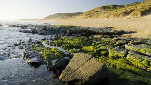 The Bass Coast region extends from Phillip Island in the west, north to Jam Jerrup and east to Inverloch. Photo: Gavin Hansford / Visions Victoria