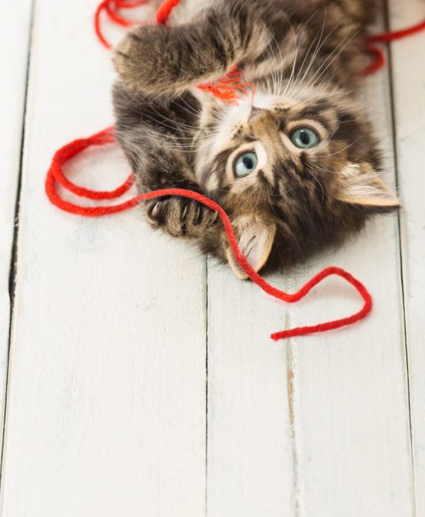 Ensure your pets have toys on hand to prevent boredom. Photo: iStock