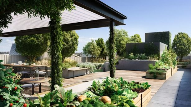 The rooftop including veggie patches at Breese Street. Photo: Milieu