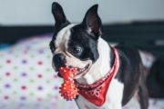 Moving with pets: A step-by-step guide
