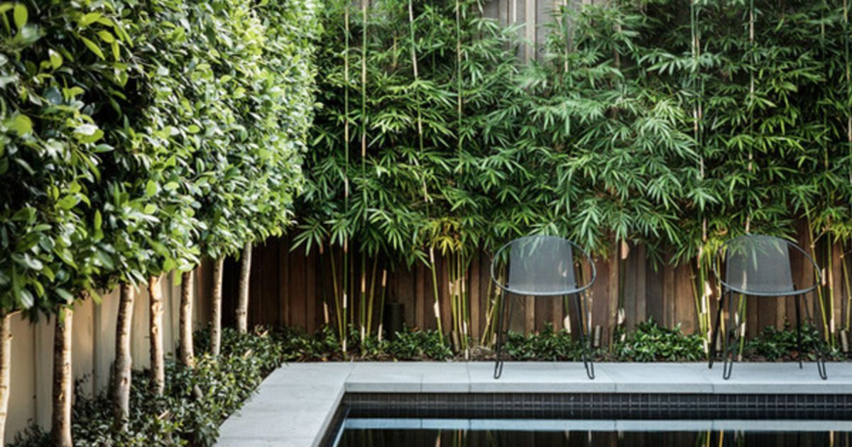 Privacy Plants To Block Out Neighbours
