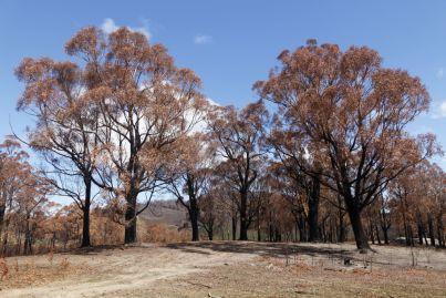 Property developers unite to aid Australia's bushfire recovery efforts