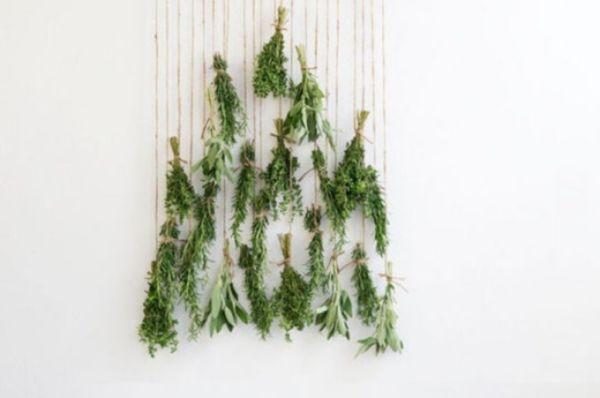 Australian Christmas Tree Pine.Christmas Tree Alternatives For Any Size Space