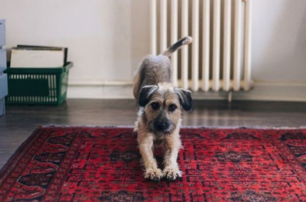 The demand for pet-friendly housing in Sydney