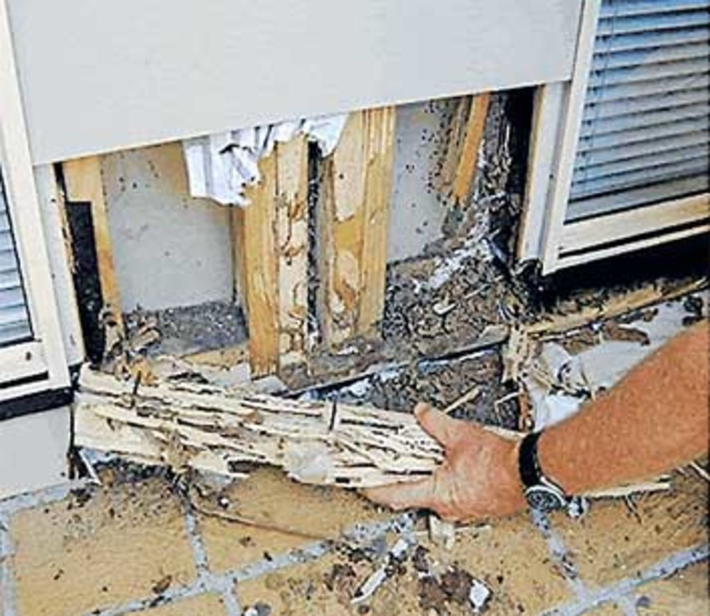 It pays to check for termites before buying a new property.