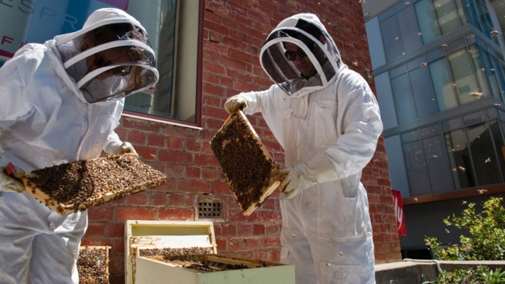 """""""Bees are reasonably gentle creatures and not the crazed stinging predators that some people think.\"""