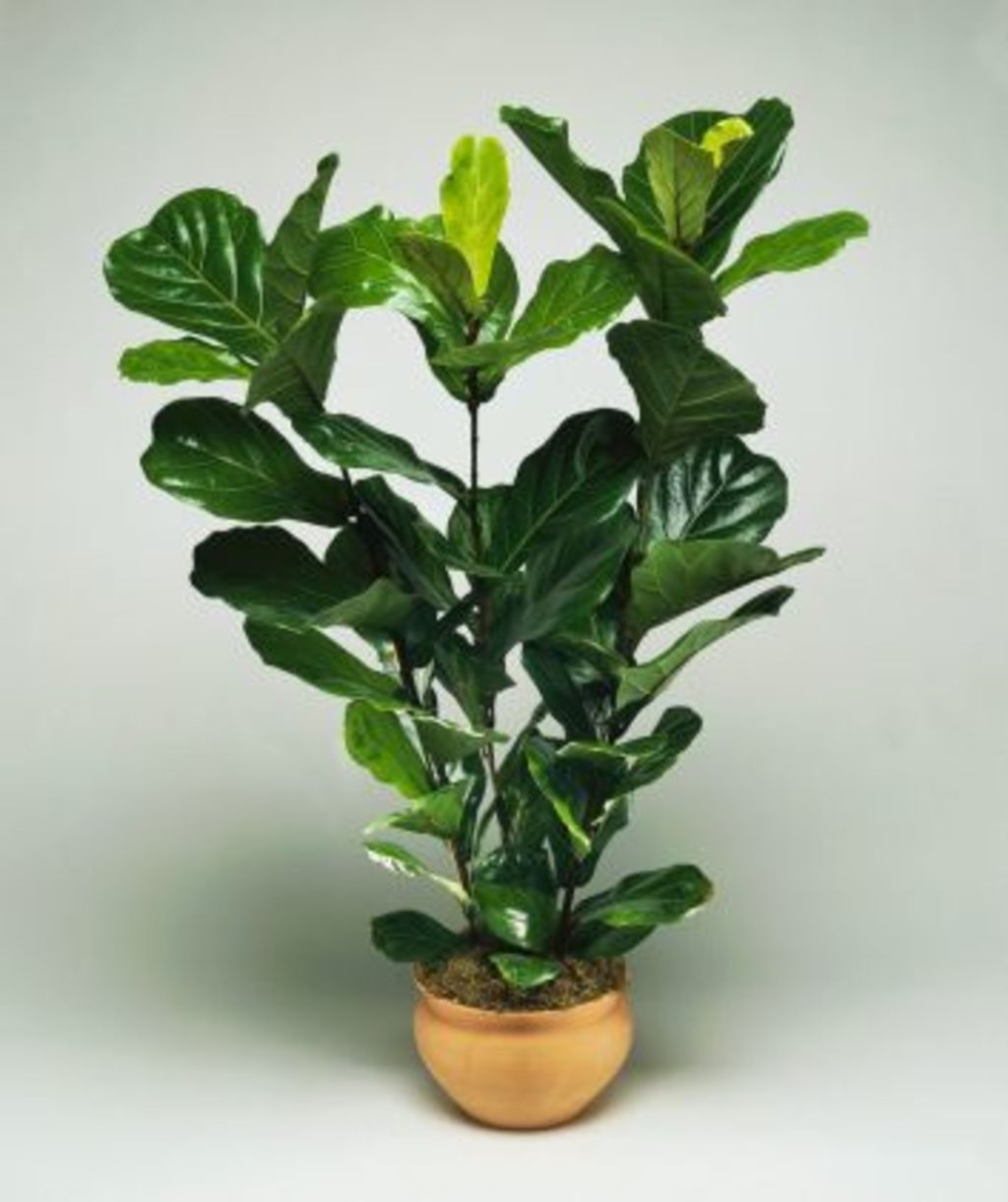 Everyone's favourite indoor plant. Photo: Getty Images