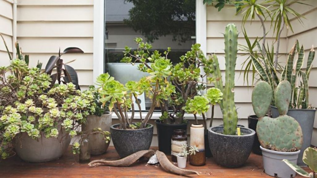 It's possible to garden when you rent. Photo: Stocksy