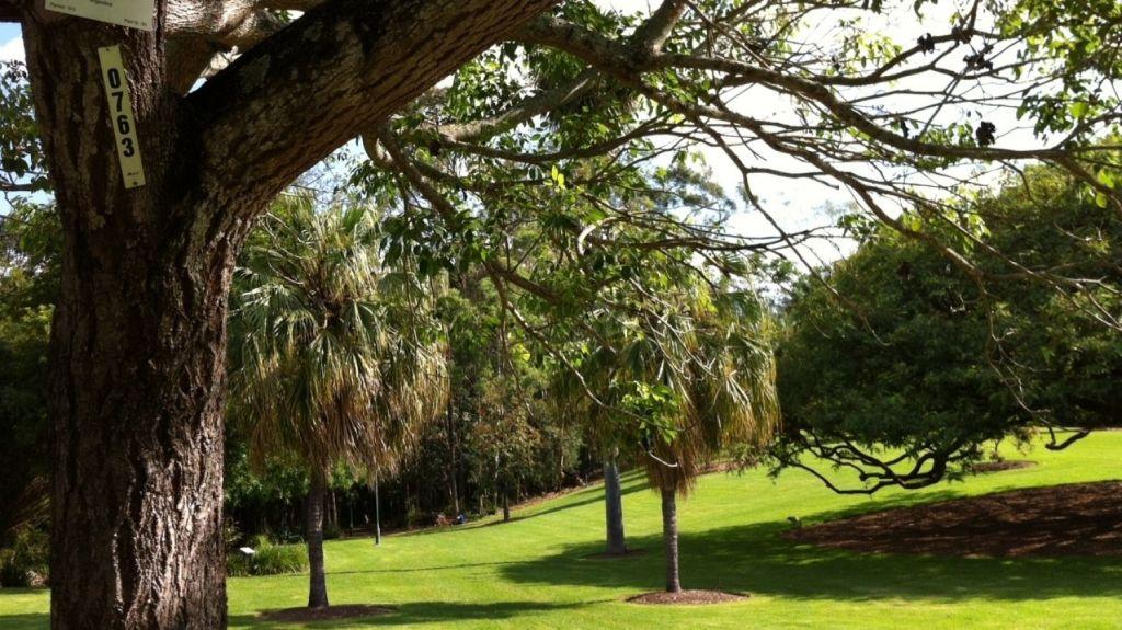 City Botanical Gardens, Brisbane Photo: supplied