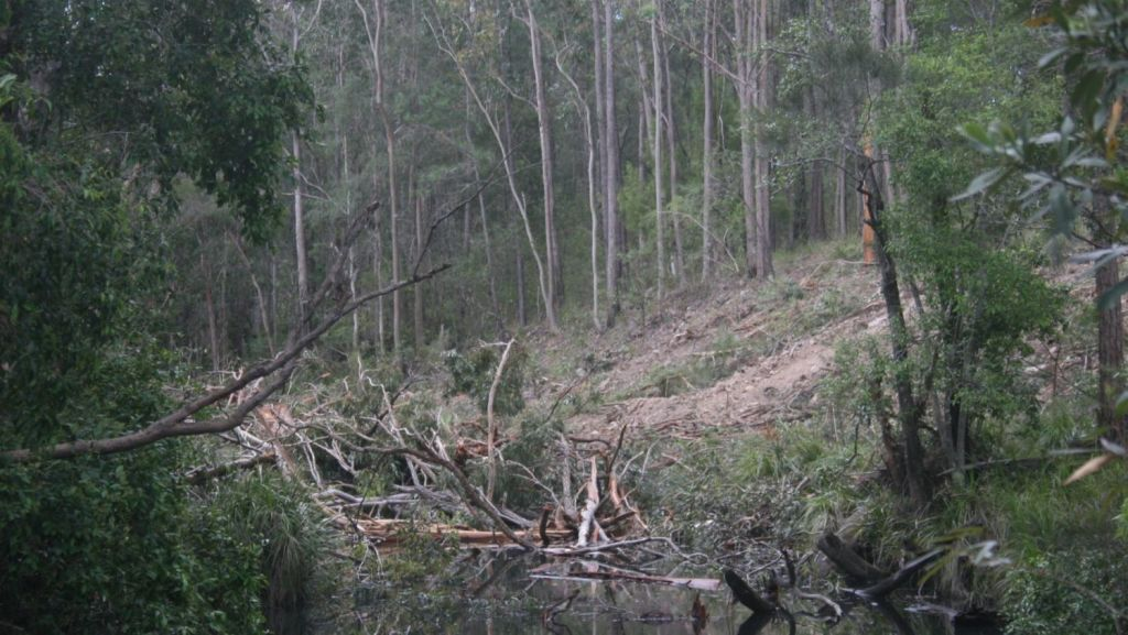 Clearing of trees in October 2015 that blocked the marine sanctuary at Nanabah Creek, which runs into Fame Cove. Photo: Ross Griffiths