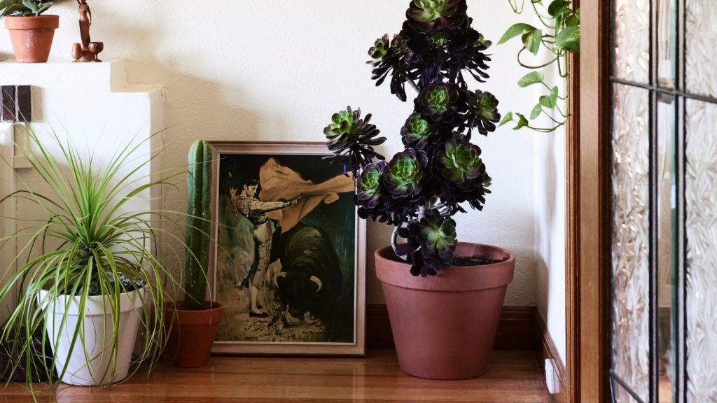 The couple have filled the home with eclectic local artworks. Photo: Eve Wilson