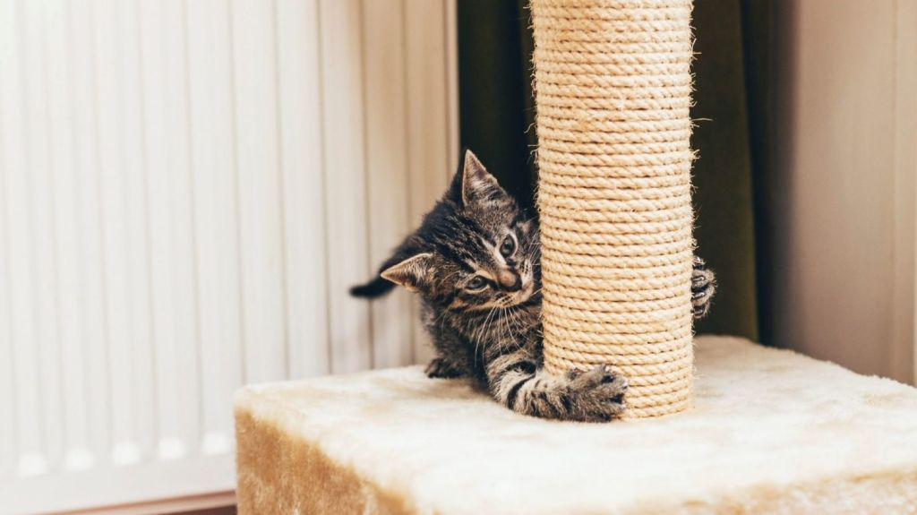 Scratch marks, water bowls and even a cat house left out: these are the things real estate agents say are a dead giveaway to hiding a pet in a rental. Photo: Ysbrand Cosijn
