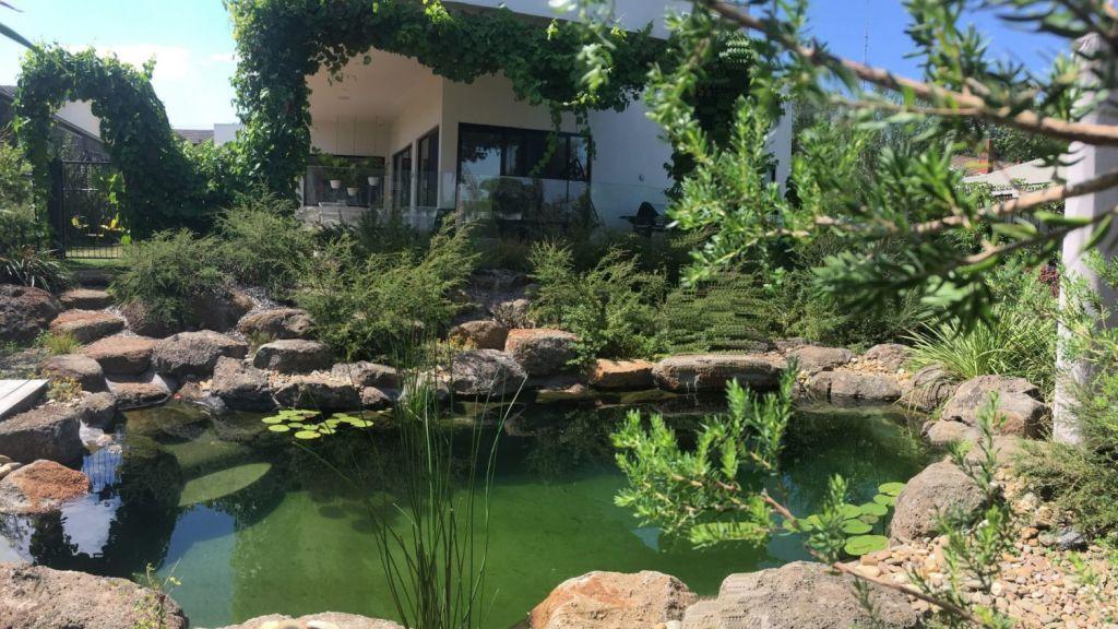 A living pool at Frances Cosway's Hampton home. Photo: Wayne Zwar, Natural Swim Pools