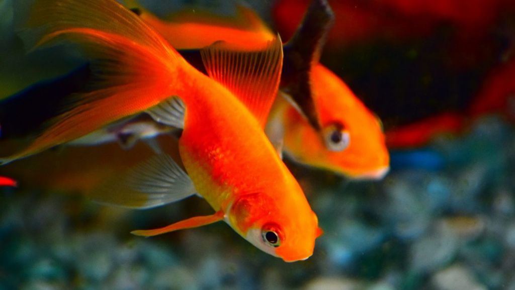 Fish are less likely to cause as much property damage as larger pets.