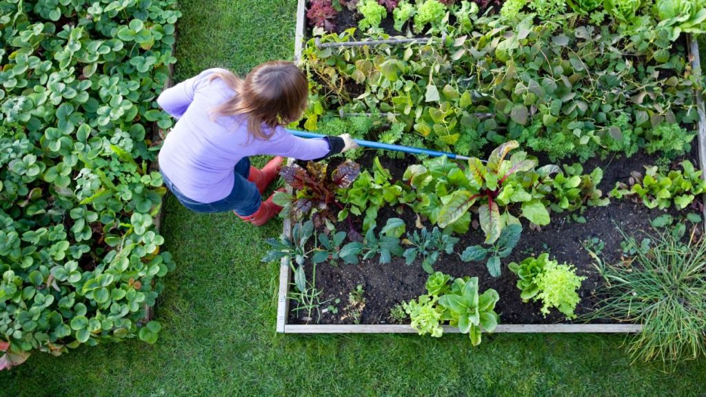Killing plants is a sure way to learn what not to do. Photo: iStock