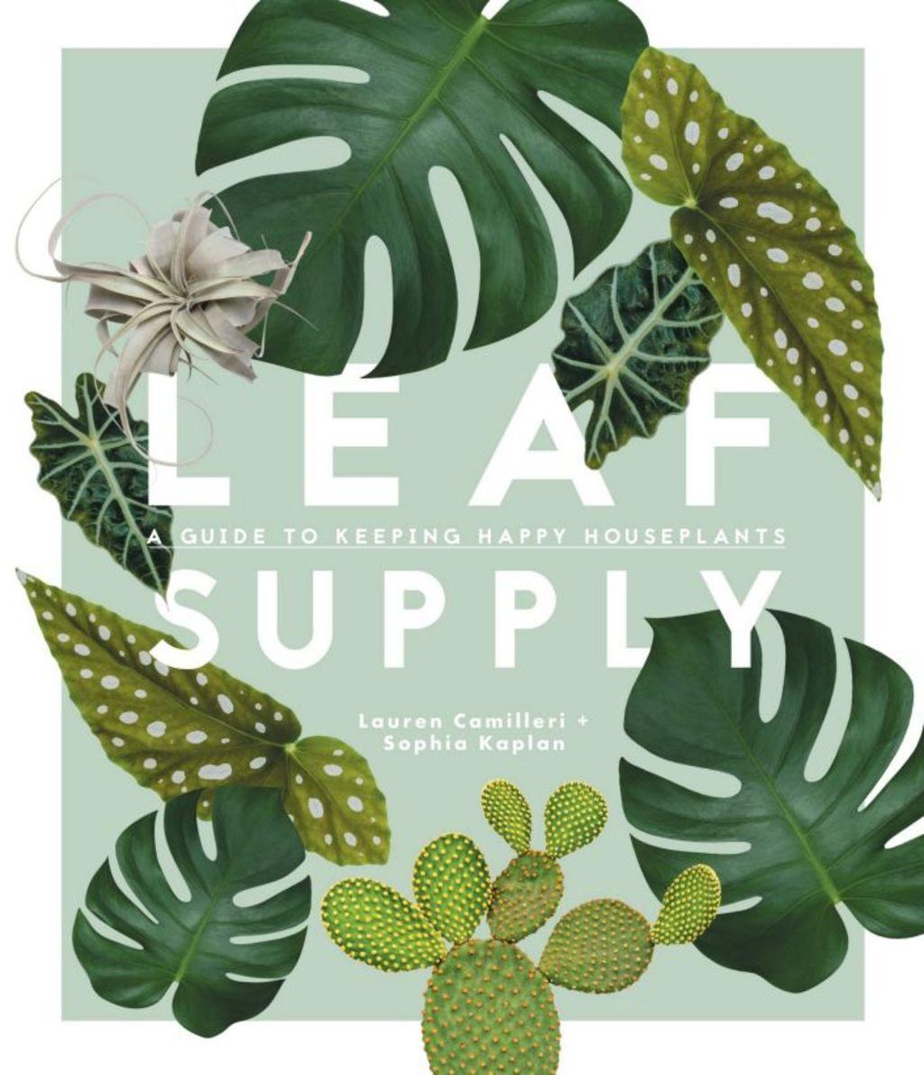 Leaf Supply offers advice on how to nurture indoor plants. Photo: Luisa Brimble