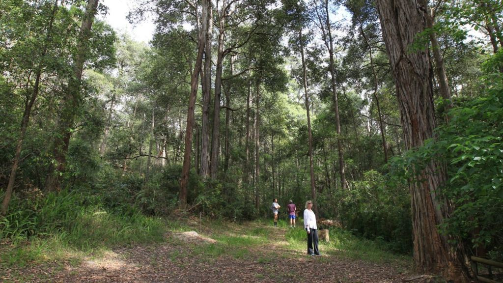 Lane Cove National Park is one of many in the area. Photo: Peter Rae