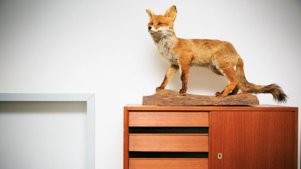 The second most despised home decor trend was taxidermy. Photo: istock