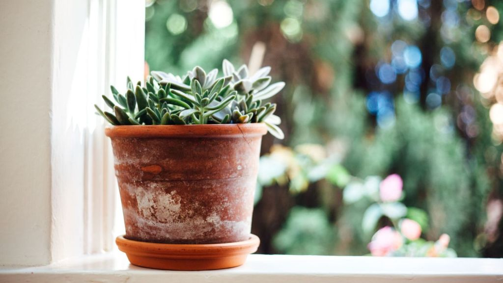 Genetically engineered plants could act as early warning systems in our homes. Photo: Stocksy